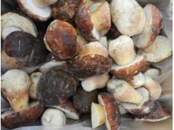 Как замораживать свежие белые грибы впрок самому