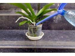 Как поливать орхидеи для роста и цветения