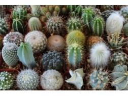 Основные виды кактусов и особенности ухода