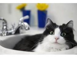 Как правильно содержать и ухаживать за кошками