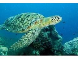 Как обеспечить хороший уход за морской черепахой