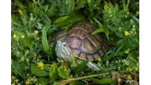 Все для красноухих черепах: товары и средства по уходу