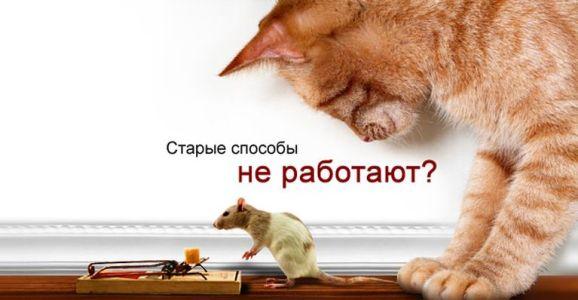 мышеловка и кошка не помогают