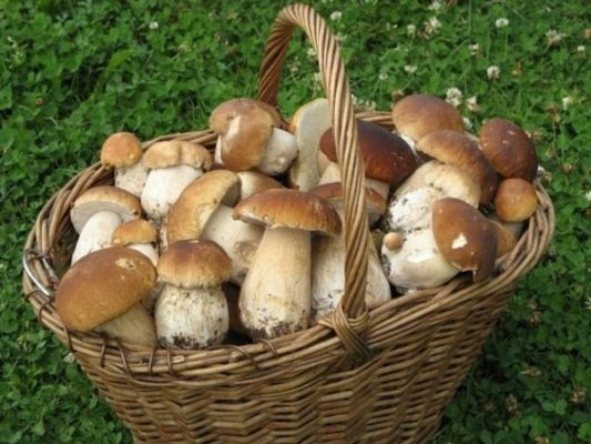 лукошко грибов