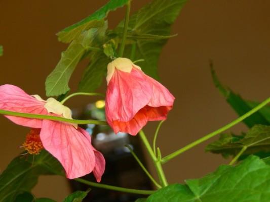 усыхание цветка