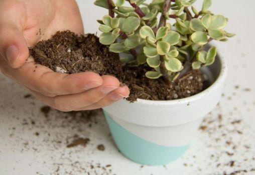 поддержание плодородной почвы