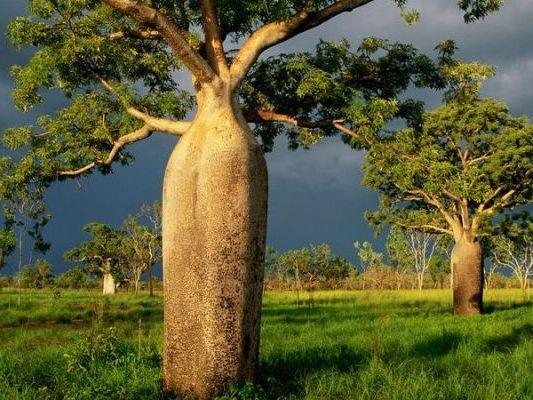 живут на деревьях