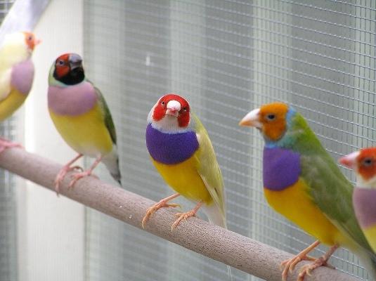 содержать сразу несколько птиц