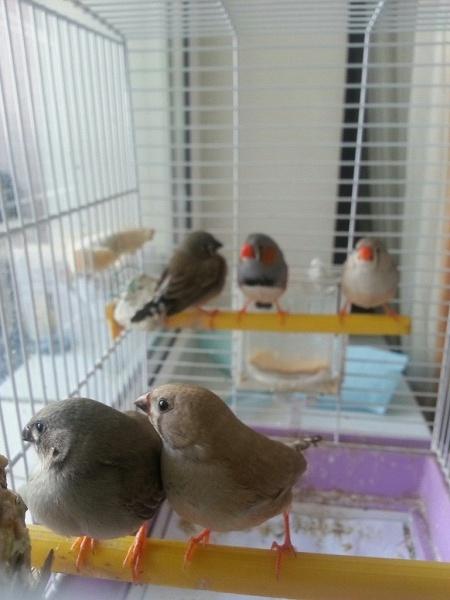 птички в клетке