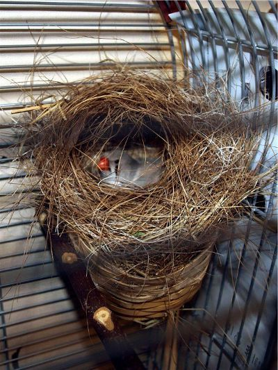 период гнездования