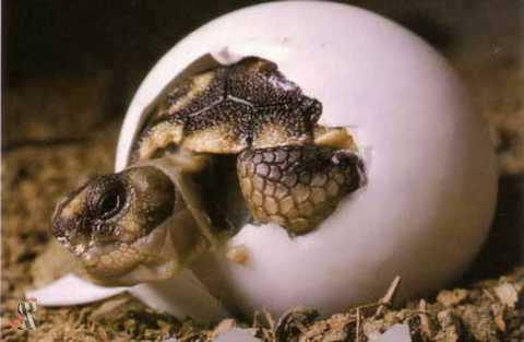 детеныш из яйца