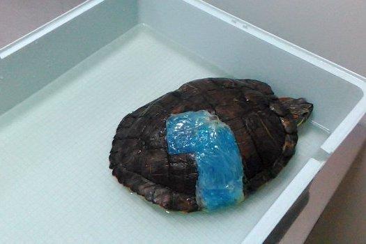 черепаха приболела