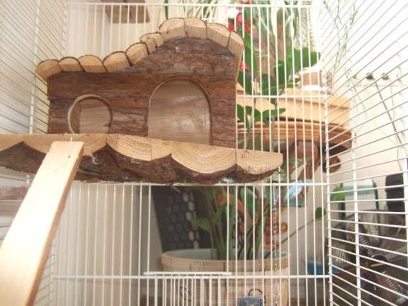 клетка для бурундука дома