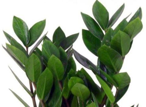 свежие листья
