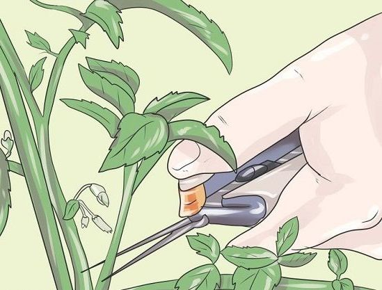 обрезать листья