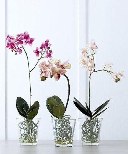 3 вида орхидеи