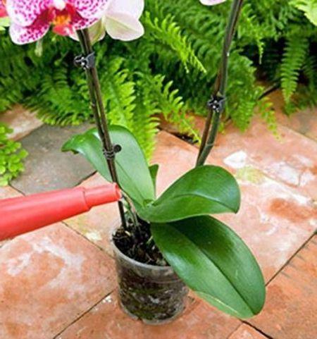 полив орхидеи в горшке