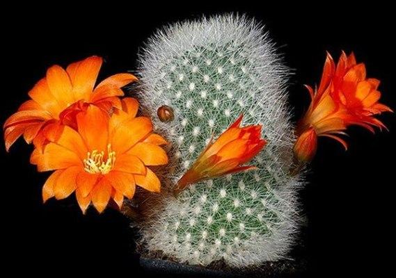 поделка из кактуса