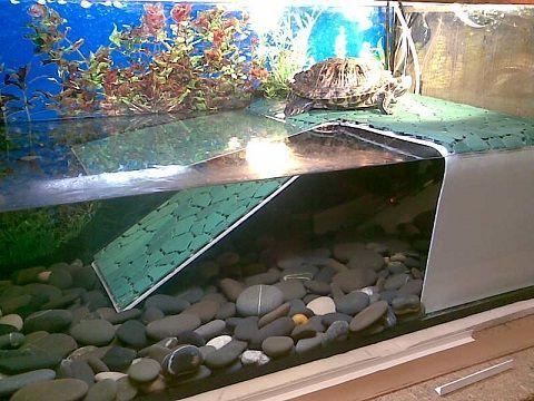 Как можно сделать островок для красноухой черепахи своими руками 107