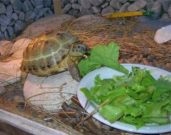 любит листья салата