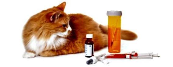 лекарства при лишае у кошки