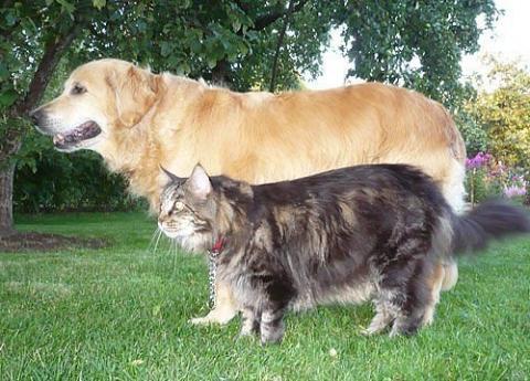 как собака