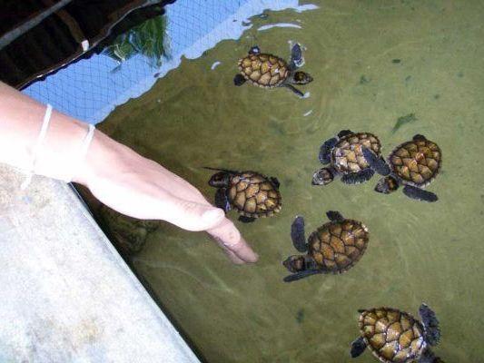 плавают в водоеме
