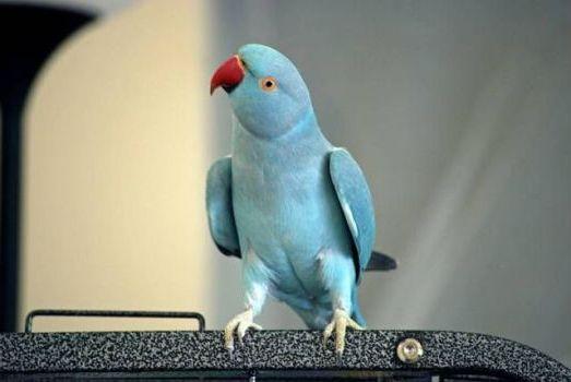 голубого цвета