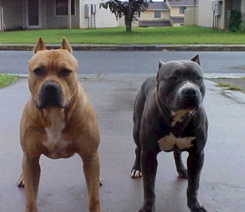 чем отличаются собаки