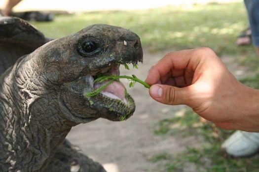 питание в природе