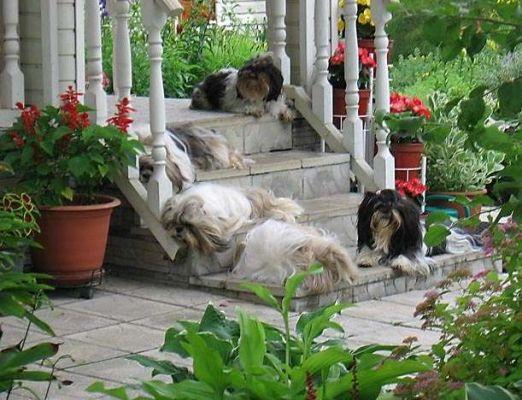 на лестнице отдыхают