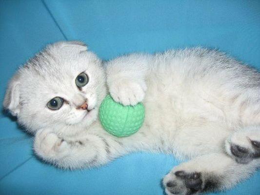 играет с мячиком