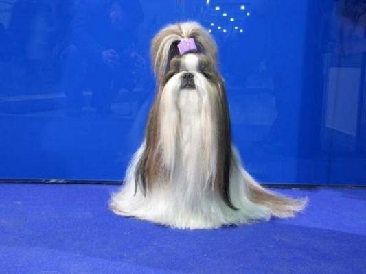 презентация на выставке собак