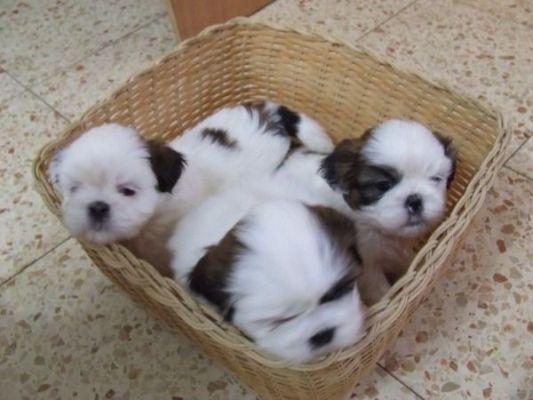 маленькие в корзинке