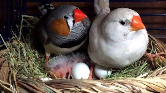 с яйцами в гнезде