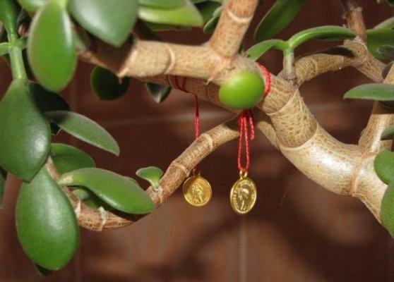 денежное дерево по феншую
