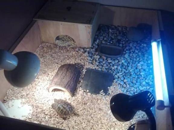 ультрафиолетовая лампа для черепах