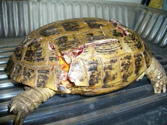 черепаха без уф лампы