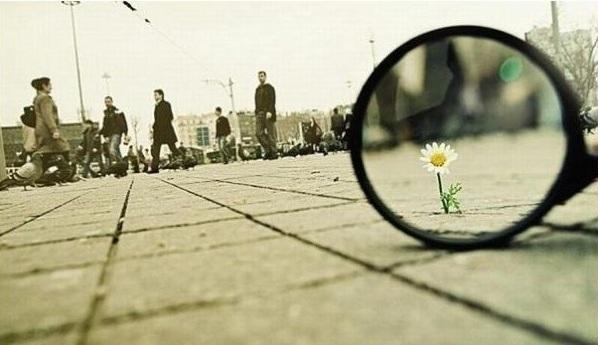 цветок на площади